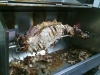hog-roast-carved-detail