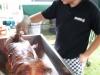 big-roast-september-2011-cricket001001055